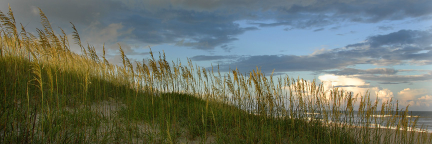 Sea Oats, Waves, Carolina