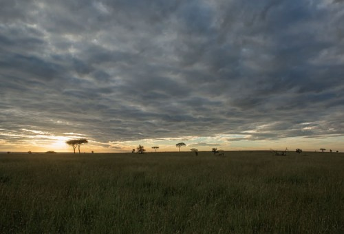 The Serengeti sun sets fast over the endless savannah.